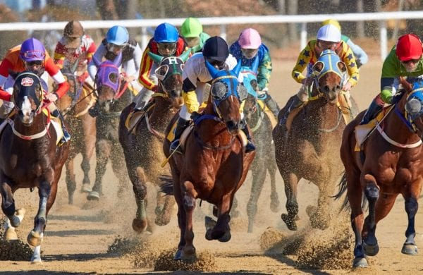 horses thunder toward the finish line